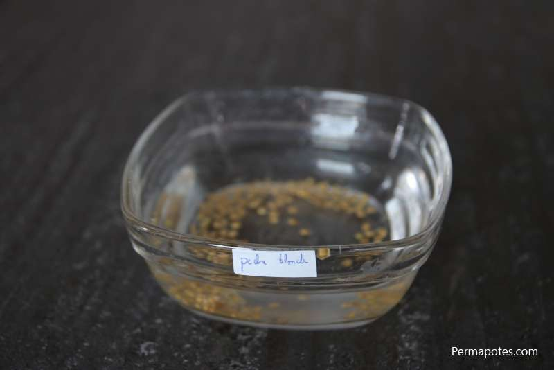 How to easily recover tomato seeds