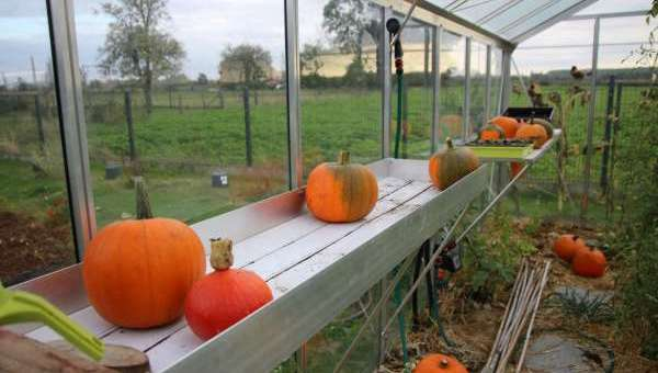 What to do in the vegetable garden in October?